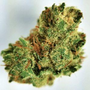 Buy Gelato Weed Kush Online